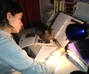 cat, girl, and working image