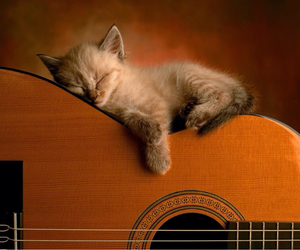 so lovely, guiter, and sleepy catty image