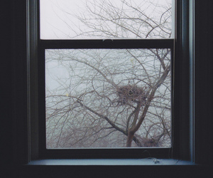 tree, nest, and window image