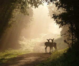 deer, forest, and nature image