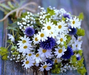 flowers, nature, and spring image