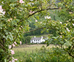 cottage, flowers, and green image