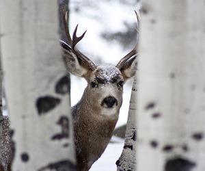 deer, animal, and reindeer image