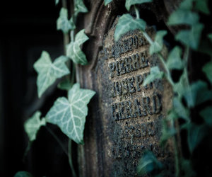 graveyard, ivy, and leaves image