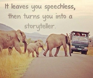 travel, quote, and elephant image