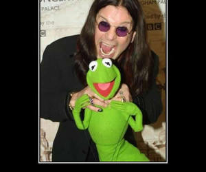 frogs and funny image