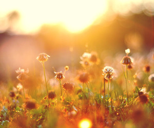 flowers and sun image