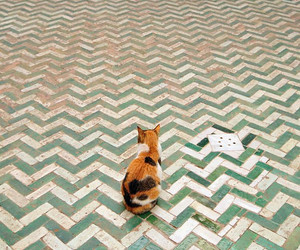 cat, animal, and tiles image