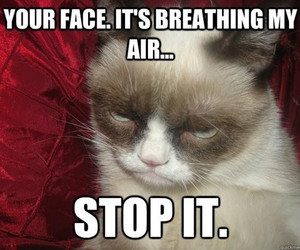 grumpy cat, breathing, and funny image