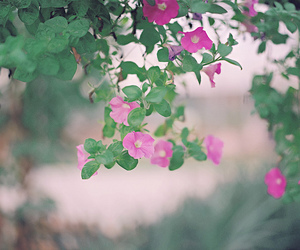 flowers, leaf, and green image