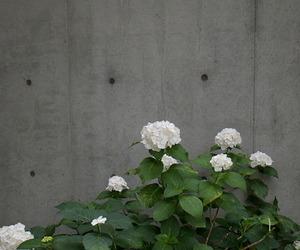 chrysanthemum, flowers, and concrete image