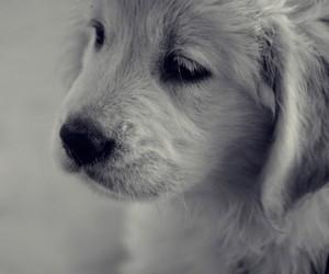 cute, dog, and pretty image