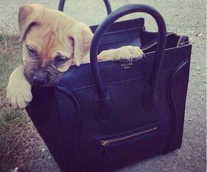 dog, bag, and cute image