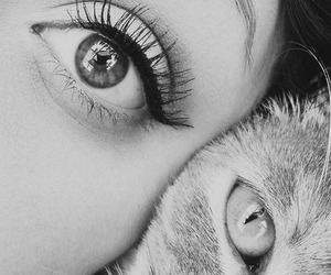 eyes and cat image