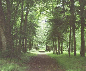 forest, brown, and green image