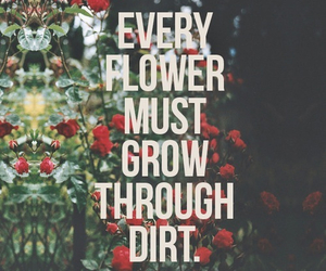 flowers, quote, and dirt image