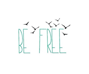 be free, bird, and transparent image