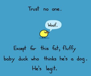 duck, funny, and trust image