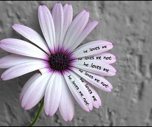 love, flowers, and purple image