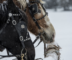 horse, nature, and snow image