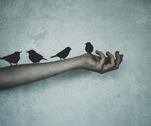 birds, love, and dark image