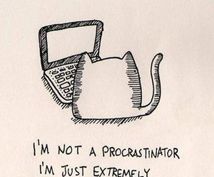 cat, quotes, and funny image