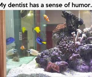 nemo, funny, and dentist image