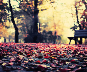 alone, leaves, and trees image