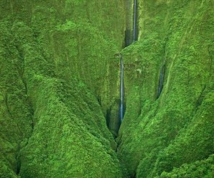 forest, green, and hawaii image