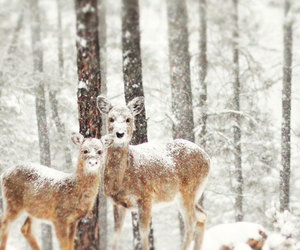 Animales, nieve, and felices image