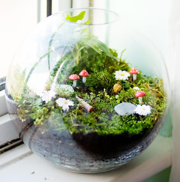 mushroom, nature, and terrarium image