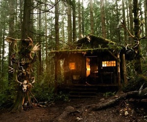 forest, hut, and trees image