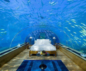 aquarium, blue, and Chambre image