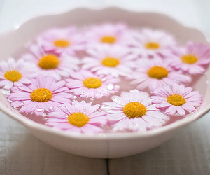 pink, flowers, and cute image
