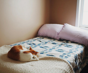 bed, cat, and bedroom image
