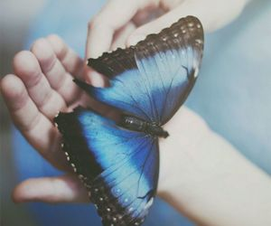 butterfly, blue, and hands image