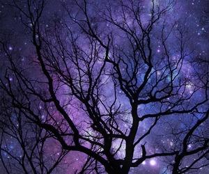 tree, beautiful, and photo image