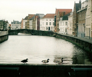 amsterdam, city, and duck image