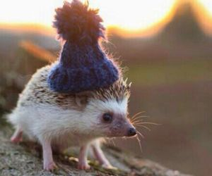hedgehog, cute, and adorable image