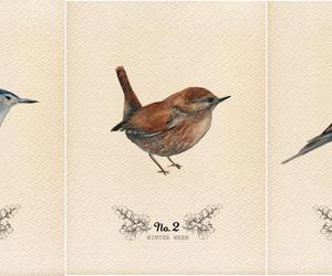 bird, illustration, and art image
