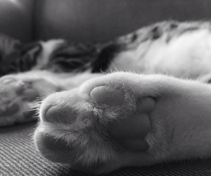 black and white, details, and cat image