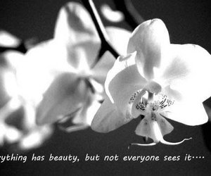 beauty, black and white, and orchids image