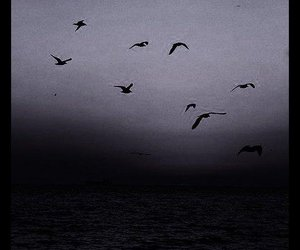 b&w, bird, and black image