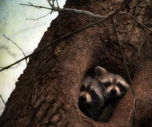 animal, tree, and raccoon image