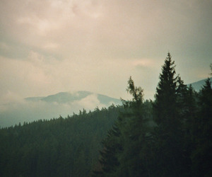 beautiful, vintage, and forest image