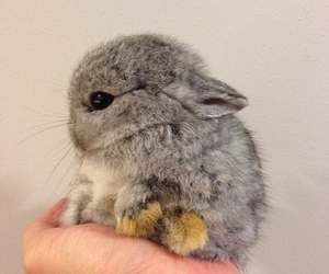 bunny, fluffy, and rabbit image