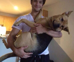 tyler posey, dog, and teen wolf image