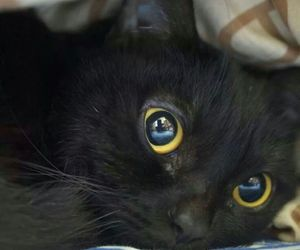 adorable, big eyes, and bed image