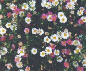 header, vintage, and flowers image