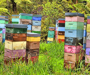 beehive, beehives, and bees image